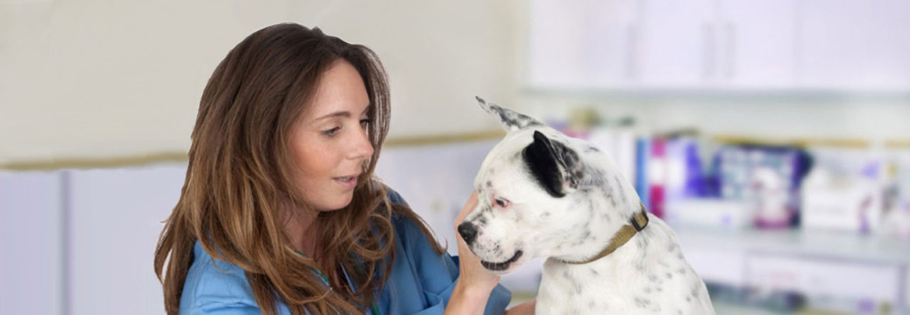 female veterinary tech with white dog
